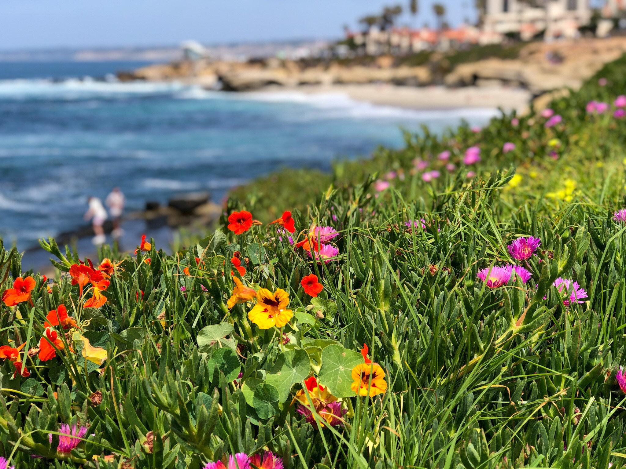 La Jolla beaches are just a short walk from the Grande Colonial La Jolla Hotel