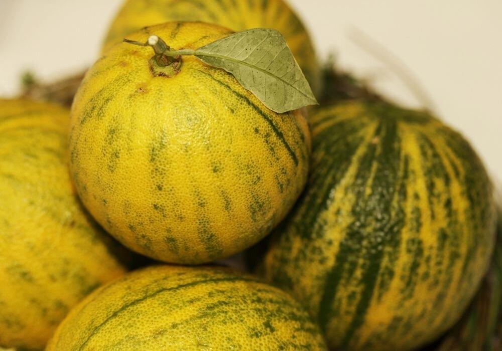 Sour orange is a common flavor in Yucatecan cuisine.