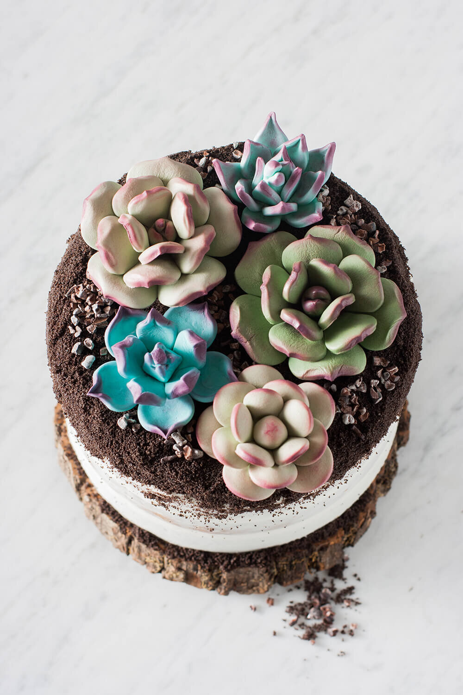 Succulent Cake Whisk Wander