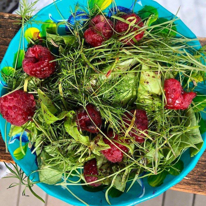 41North Butter lettuce & fennel micro greens, raspberries and a raspberry vinaigrette
