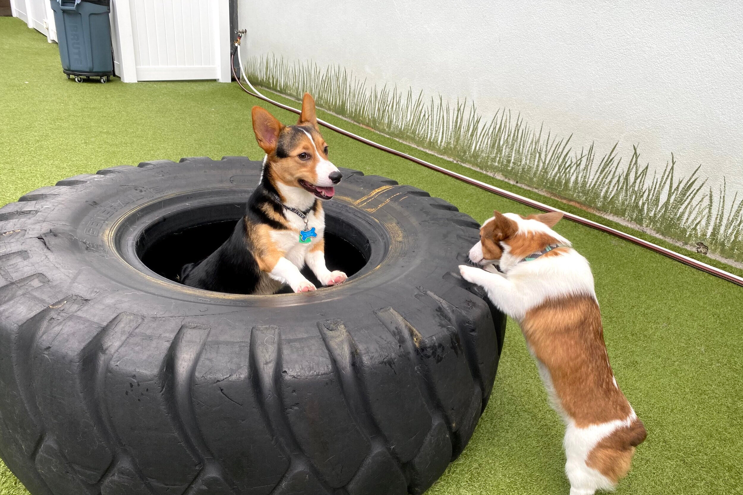 Memberships At The Dog Yard Bar In Ballard Dog Yard