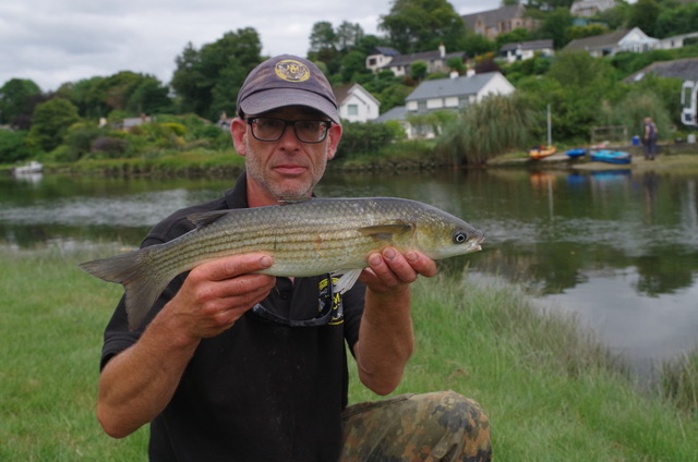 A nice thick lipped grey mullet caught on float fished bread