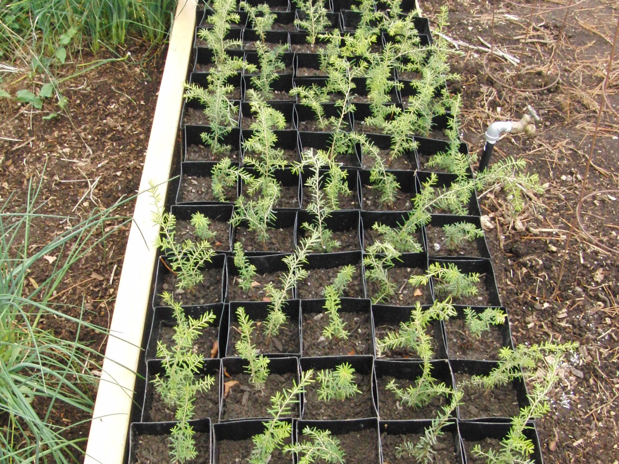 GROW IT FORWARD | Restoring Forest Habitat with Micro-Nurseries