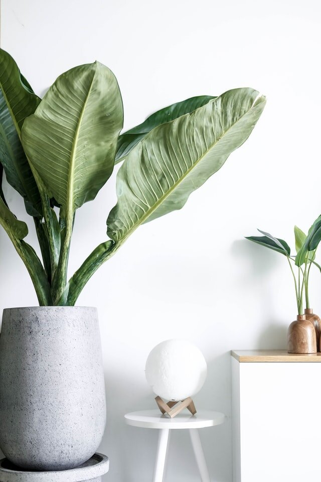 minimalray-minimalism-minimalist-aesthetic-style-plant.jpg