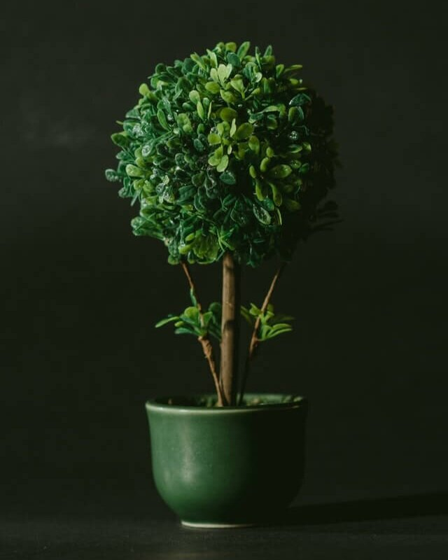 minimalray-minimalism-non-materialistic-gifts-plant.jpg