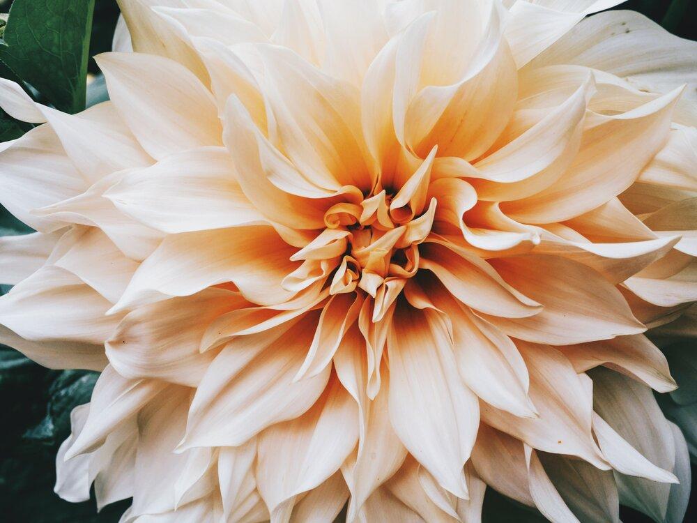simbolismo flor de lis