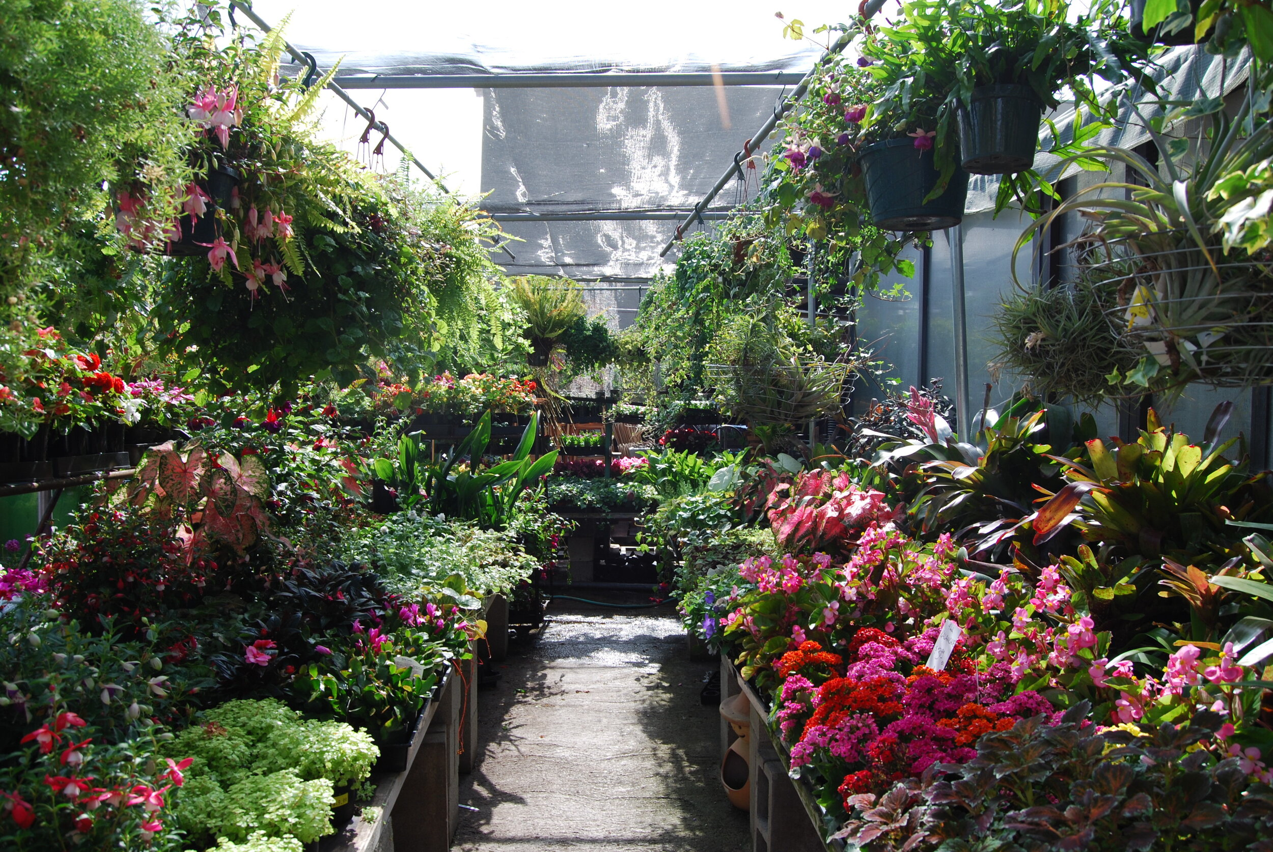 Sunset Blvd Nursery