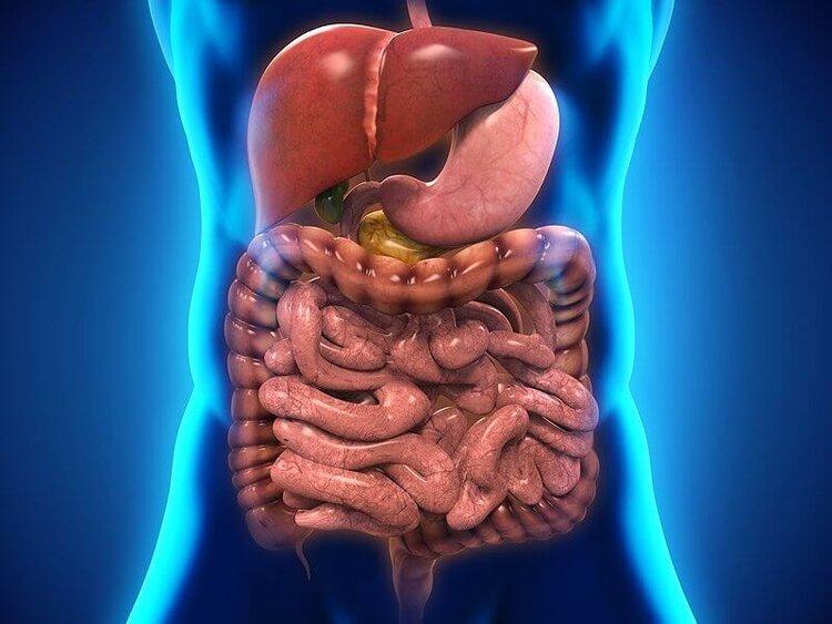 Gastrointestinal System.jpg