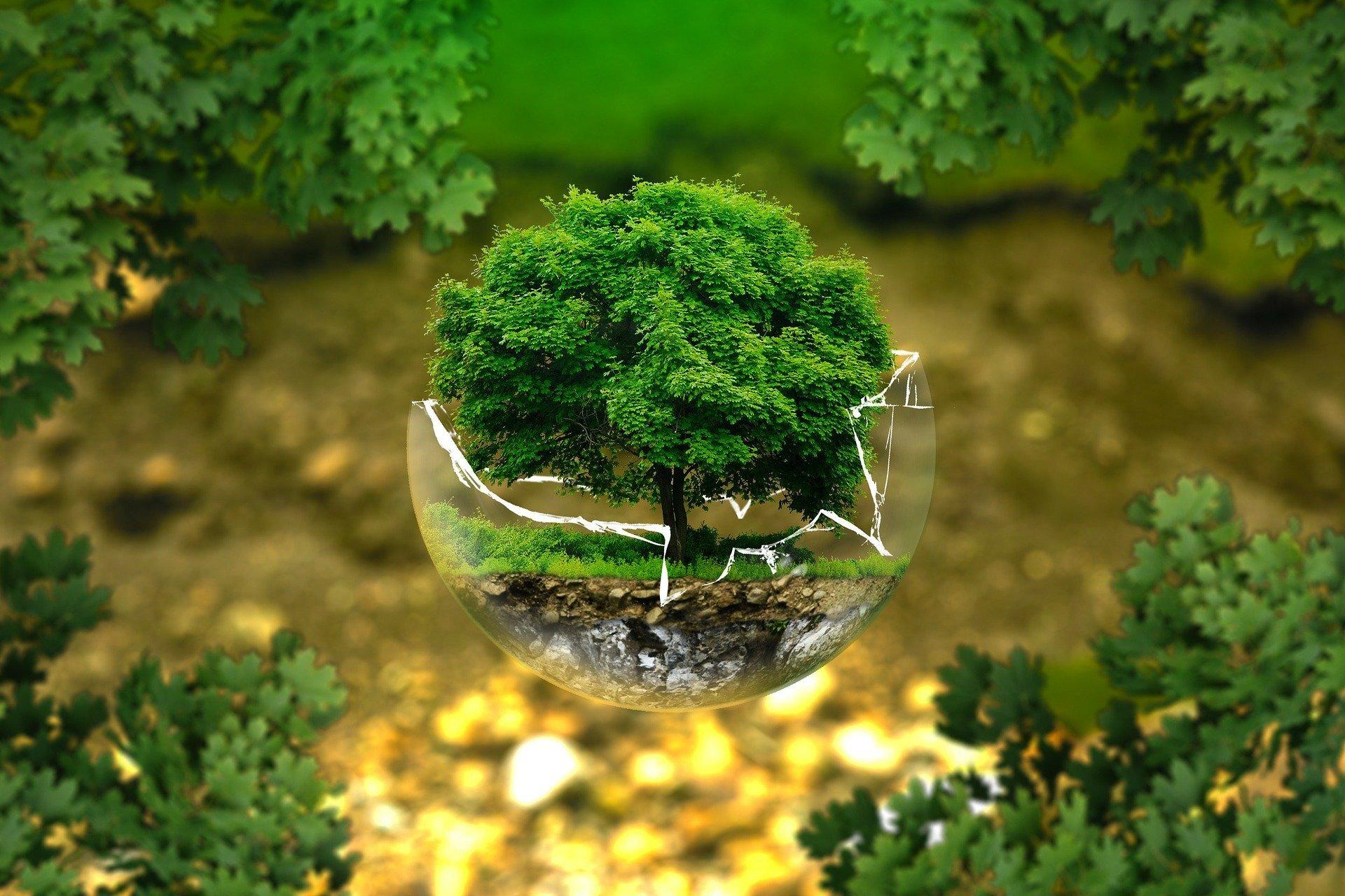 Bærekraft er en viktig del av omstillingen — Vidsikt