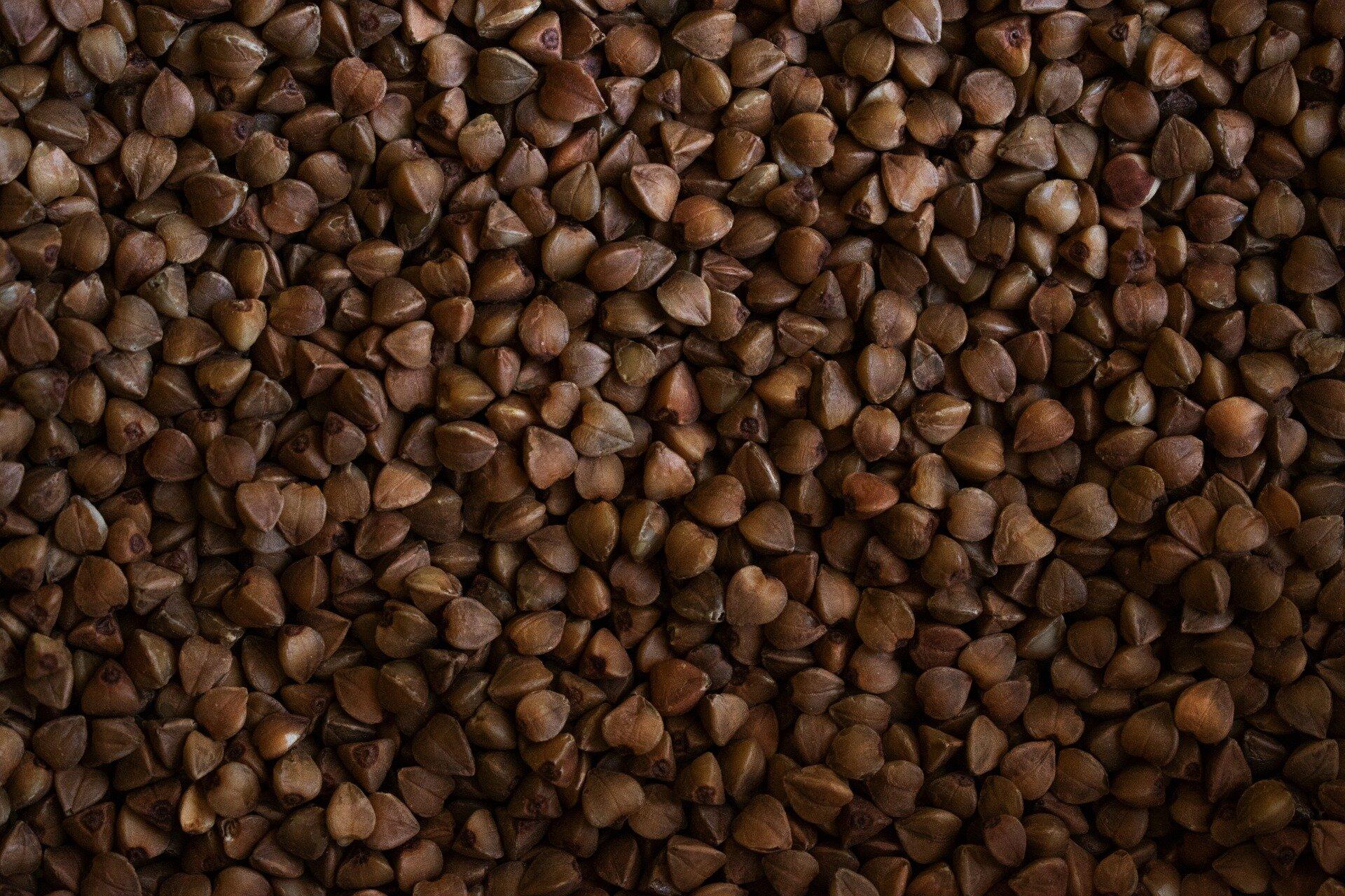 Seed Profile_ Buckwheat