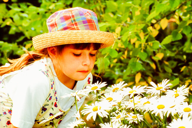 A child gets a close look at daisies in the garden.