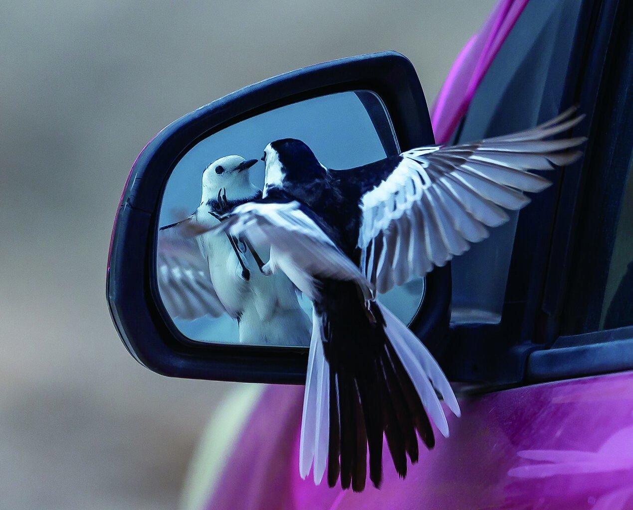 Bird in windpw.jpg