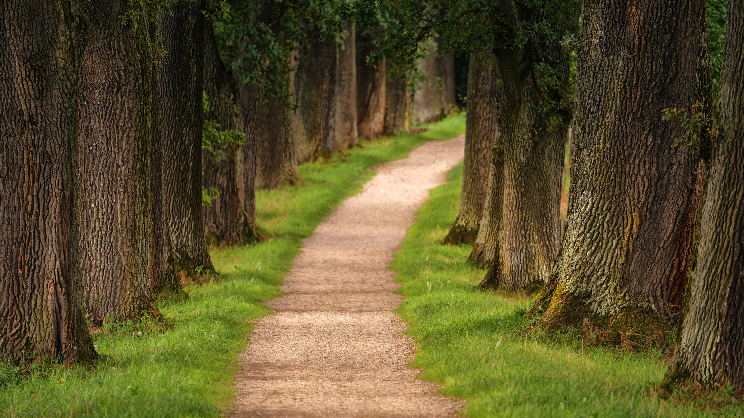 Discernment is about choosing the path that God is inviting us into -