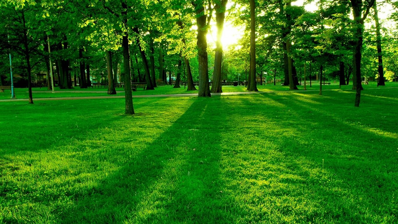 Green is the colour of hope