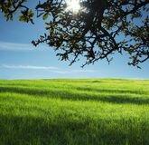 rural-landscapes-54186122.jpg