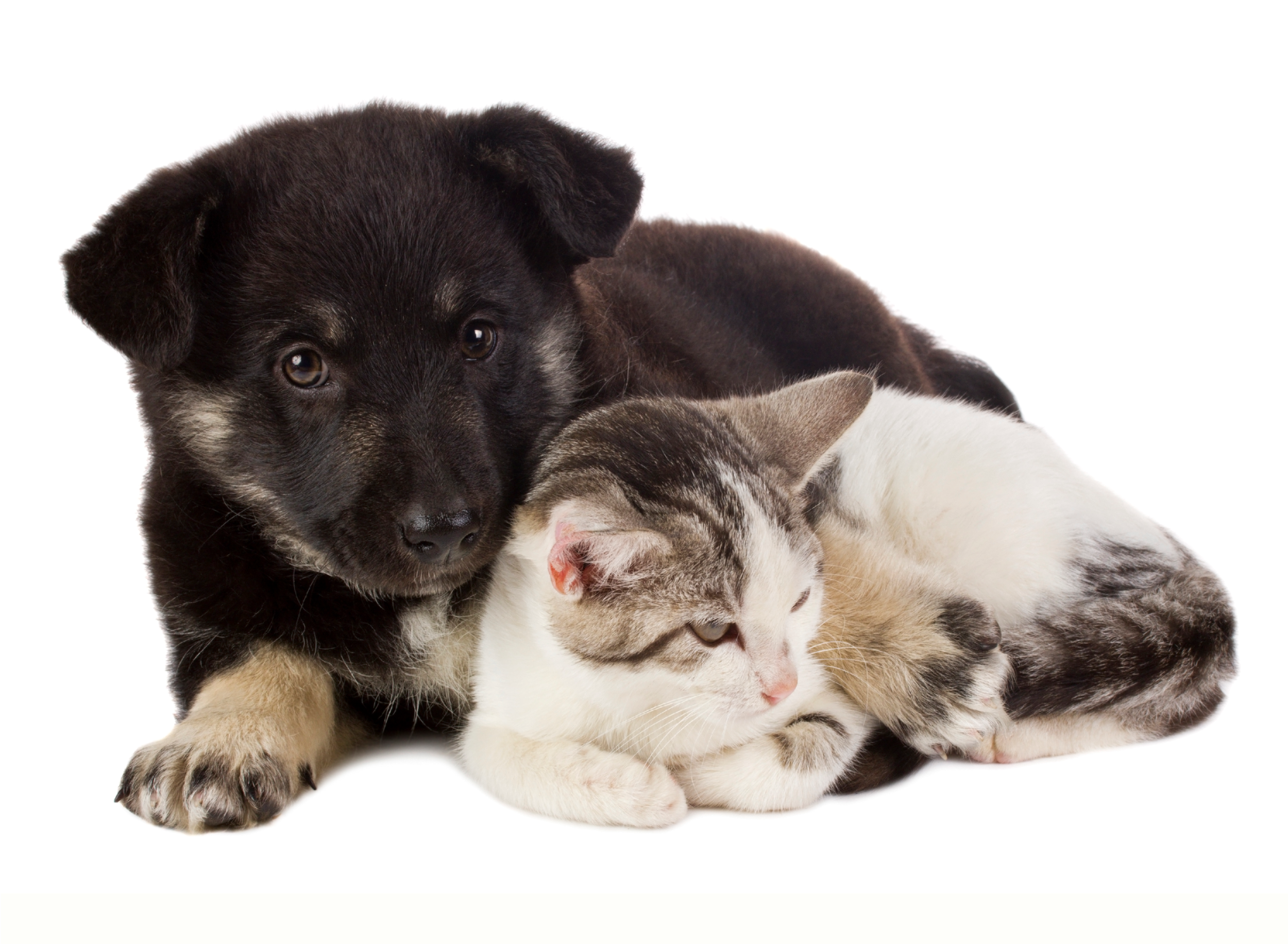Low-cost spay / neuter services for cats, kittens, dogs and puppies help address the pet overpopulation problemand prevents new generations of homeless pets.