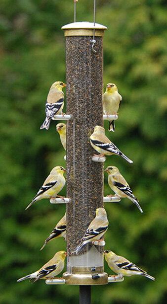Finch Feeders The Fat Robin