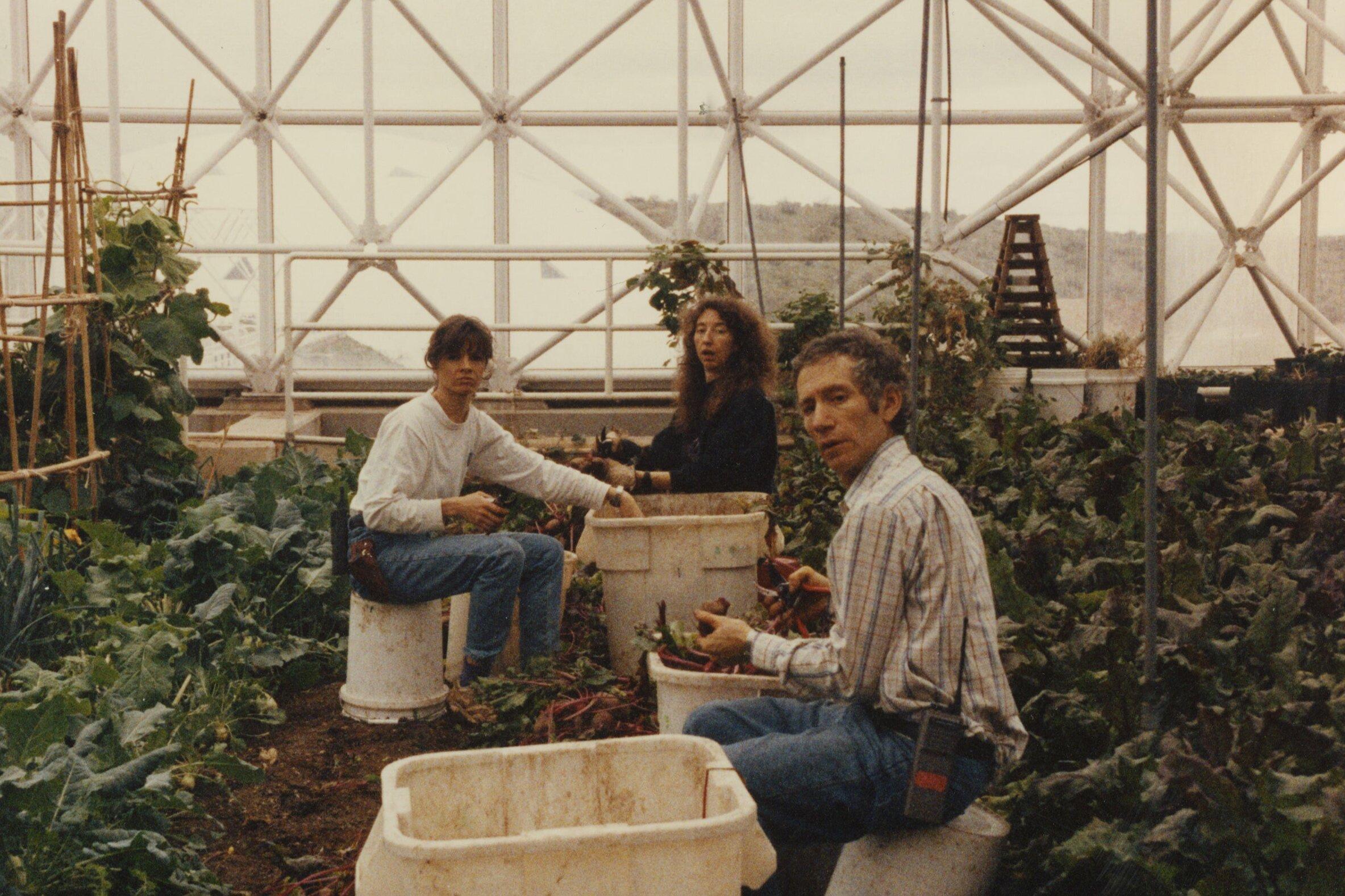 Biospherians harvesting produce in the Biosphere 2