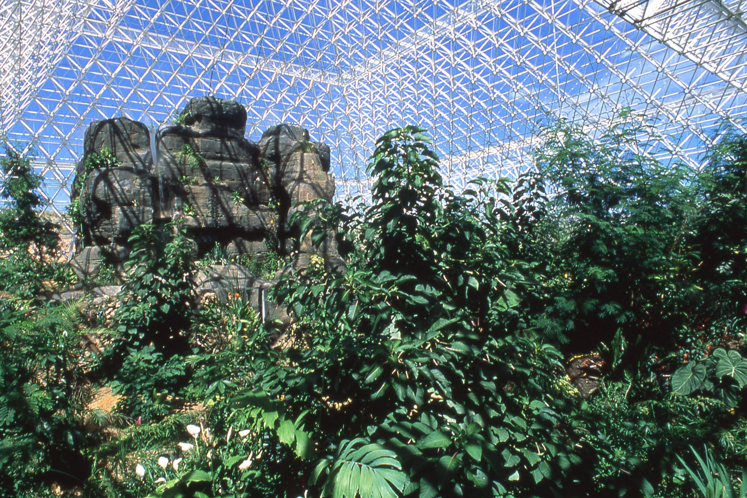 Rainforest biome  in the Biosphere 2