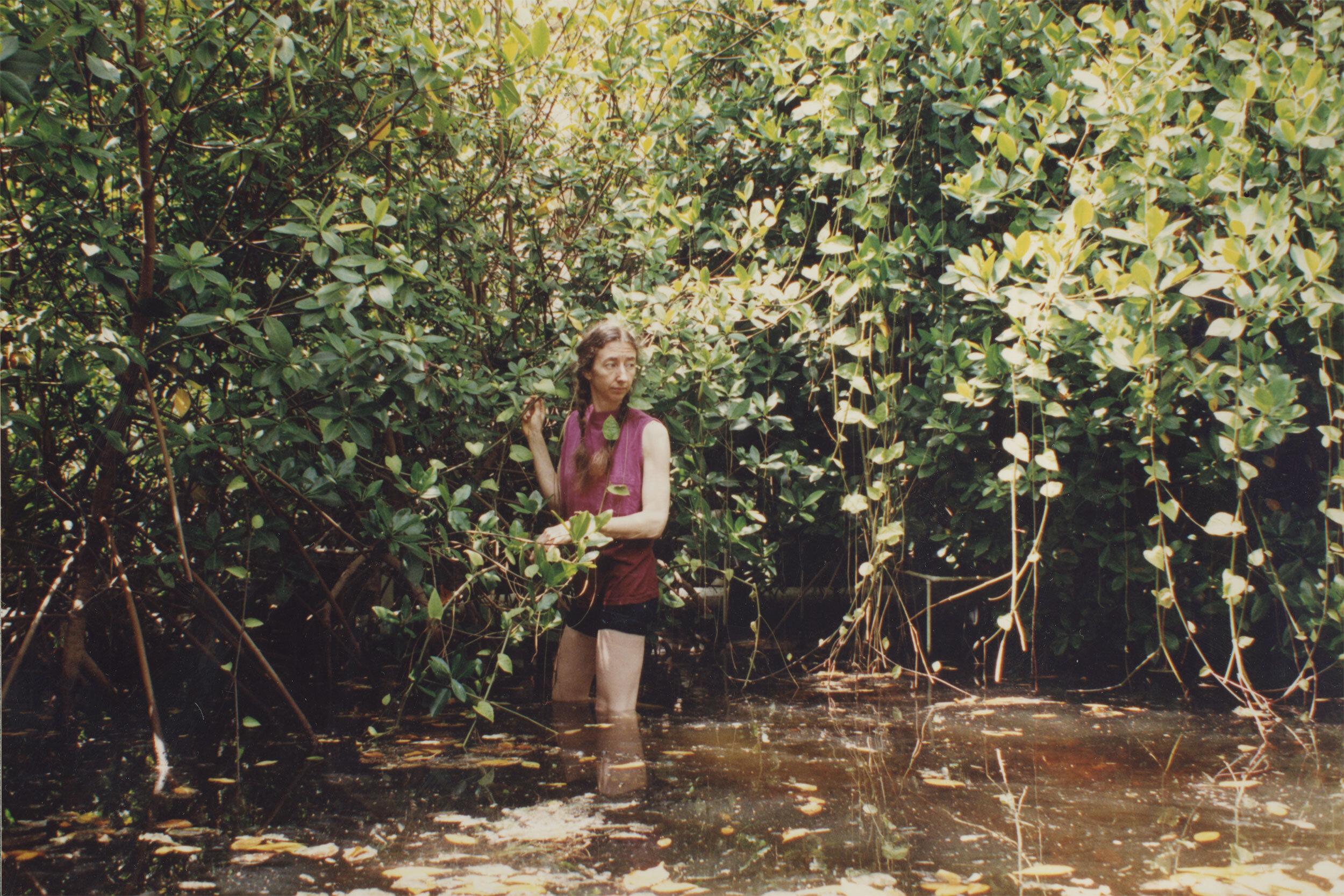 Biospherian Linda Leigh in the mangrove biome