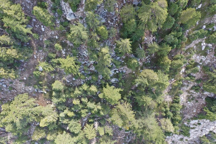 One search image out of thousands taken of a search area in a heavily forested environment.