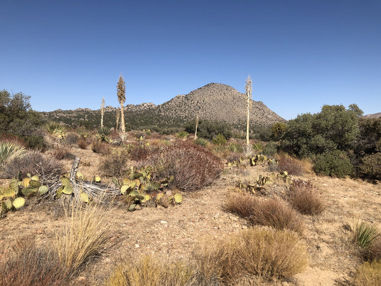The desert near the Sawmill Trailhead is lonely and beautiful.