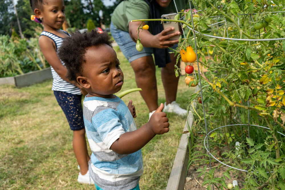 A child gazes at tomatoes. Contributed photo from C.O.P.E