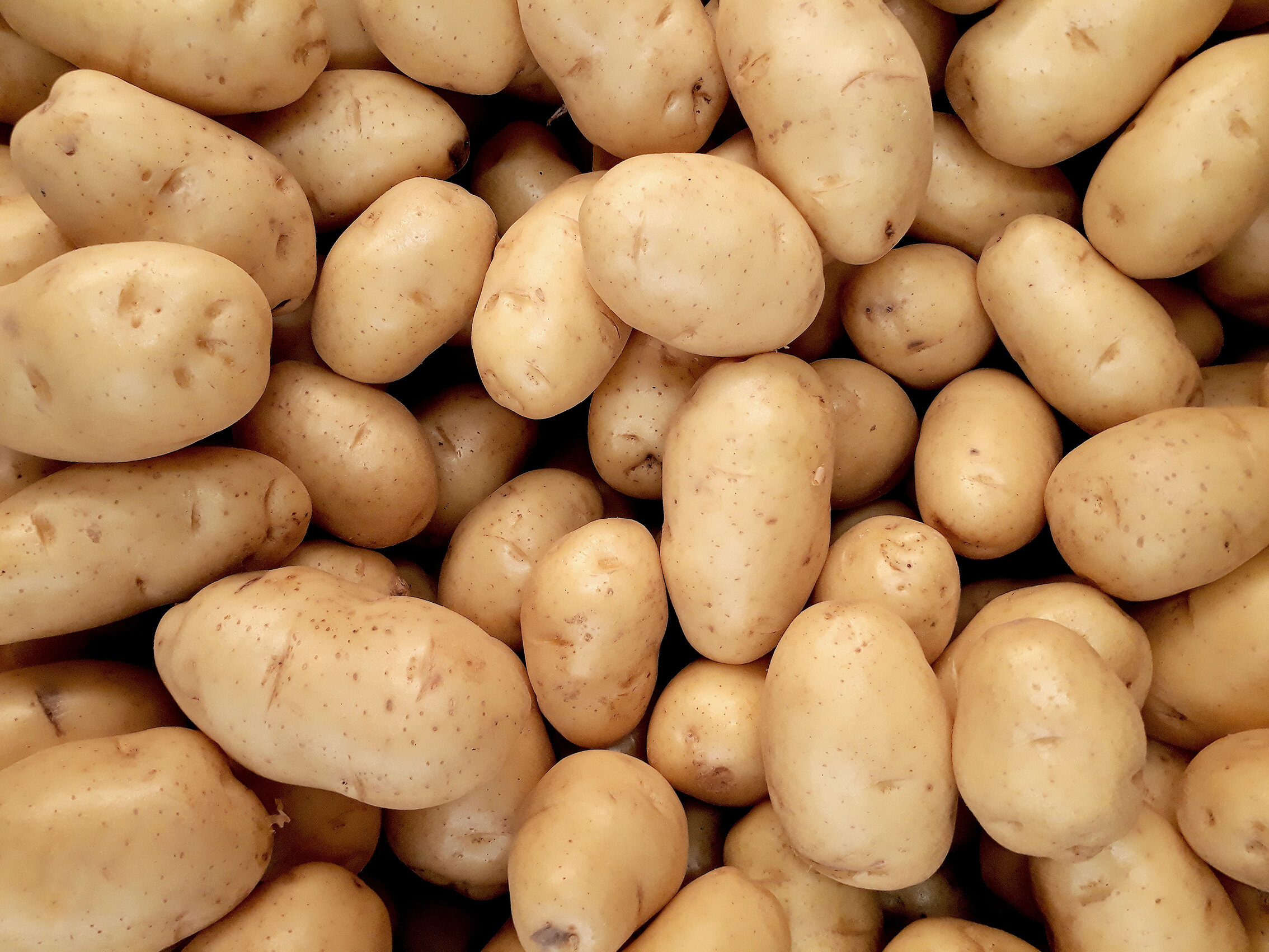 photo-of-pile-of-potatoes-2286776 (1)XS.jpg
