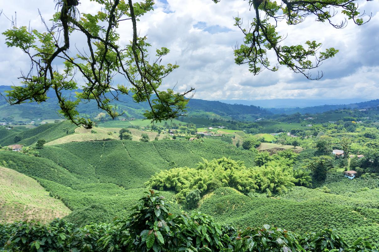 Nicaragua Coffee Farm