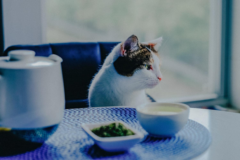 Catnip Tea The Herbal Tea You Can Drink With Your Cat Mel Had Tea