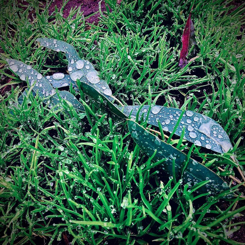 Photo: Rain on leaves