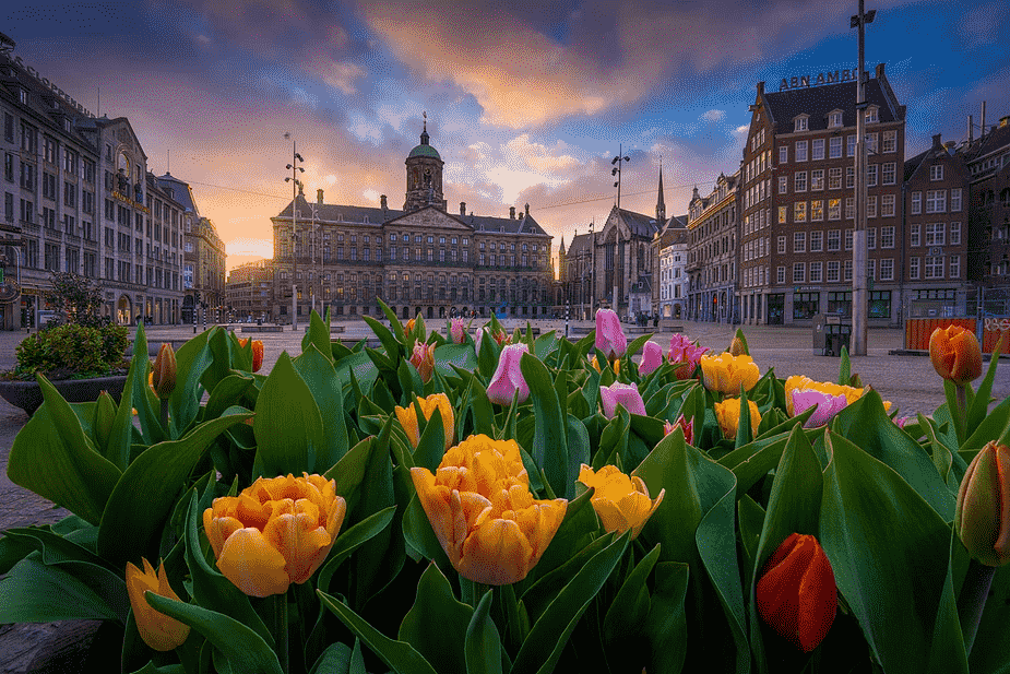 A view of Amsterdam and their tulips. (picture from Albert Dros)