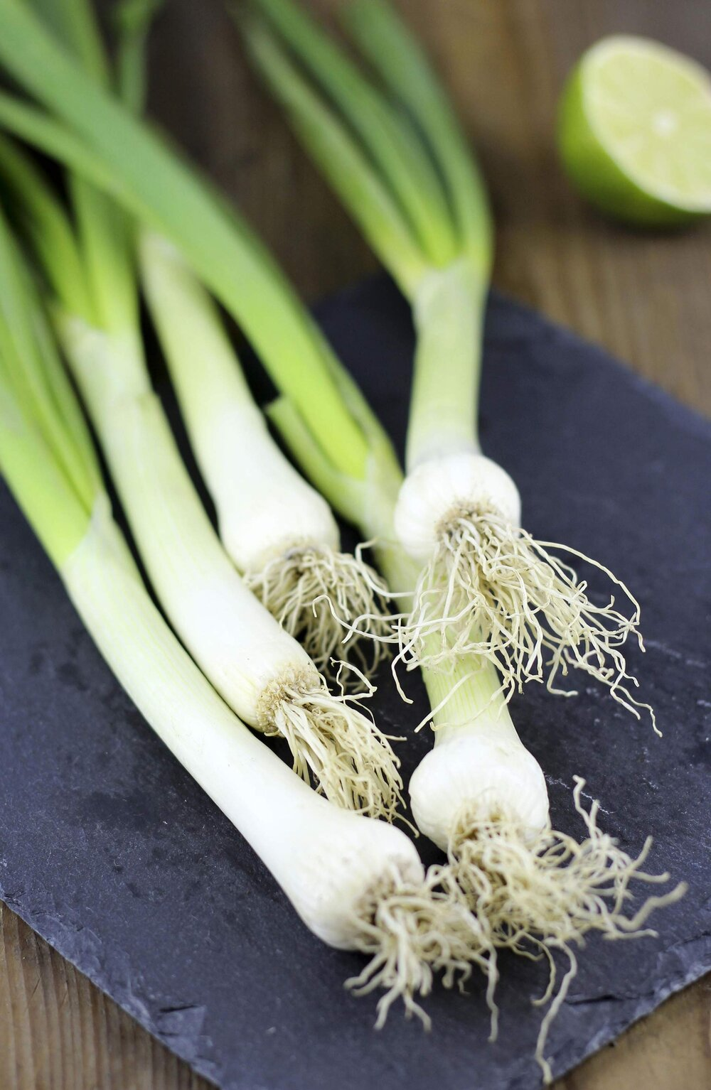 The bulb on these spring onions are the stem, and you can see the fibrous roots coming from the base.   Image source