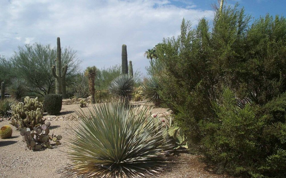 Arid plants in a sandy garden that is similar to their natural desert environment.    Image source
