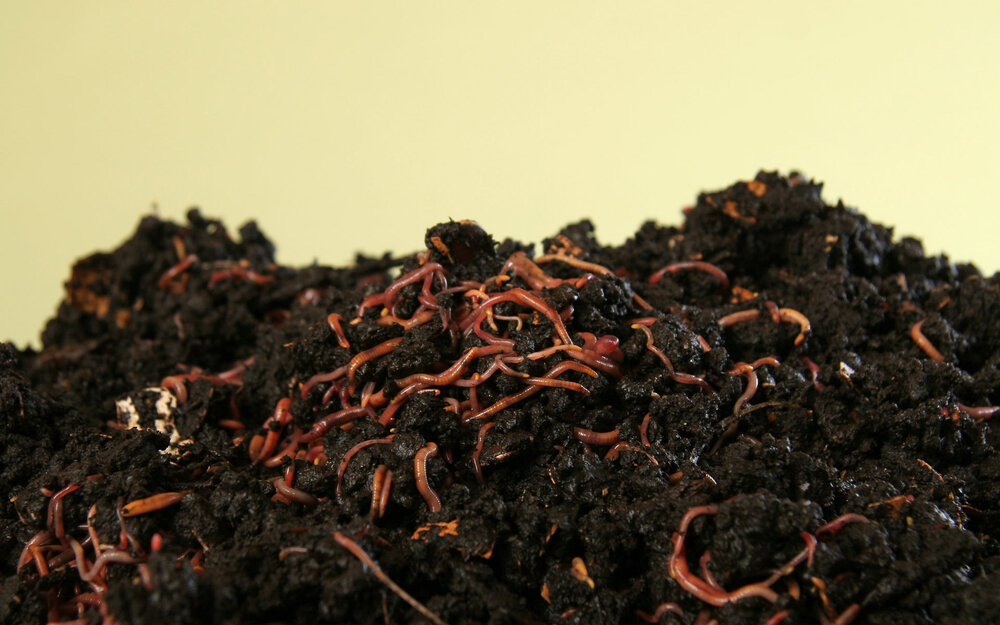 Earthworms love to eat organic material and break it down.  Image source