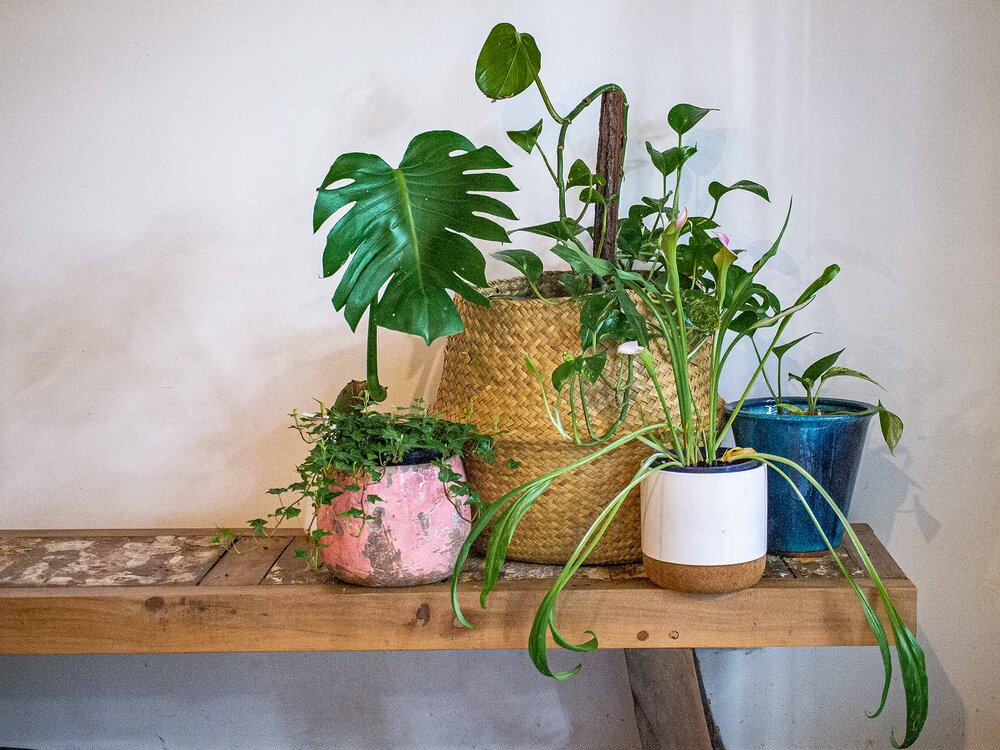 Water is the essence of life on earth; not one living thing can survive without it. Keep your indoor plants happy and healthy by giving them the right amount of water. Photo via Plants Grow Here.