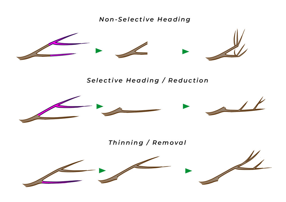 The three types of cuts: heading, reduction and removal. Diagram via Plants Grow Here.