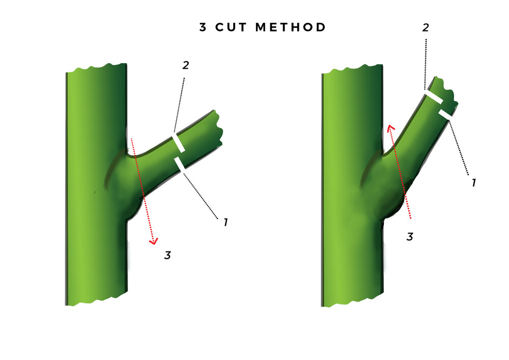 Two versions of the 3-cut-method: one with the third cut from the top, and another with the third cut from beneath. Diagram via Plants Grow Here.