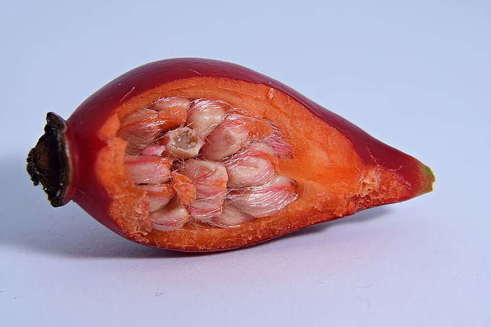 A rose hip ( Rosa sp . I think) that has been cut to show a cross section of the seeds.    Image source
