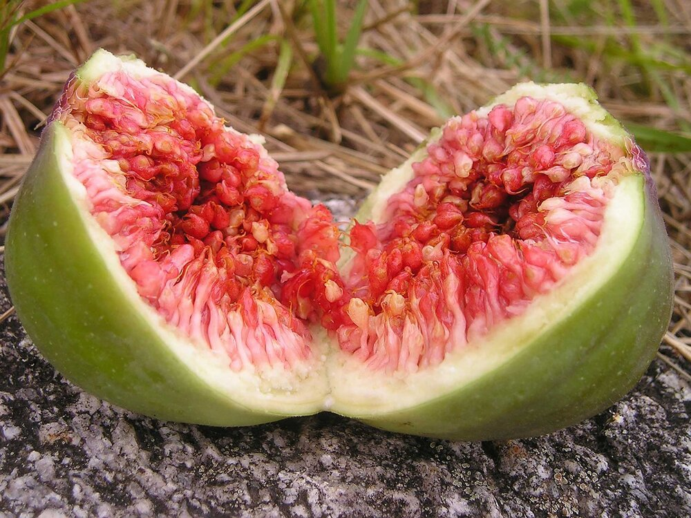 A common fig  Ficus carica  split apart revealing the tiny fruits inside.  Image source
