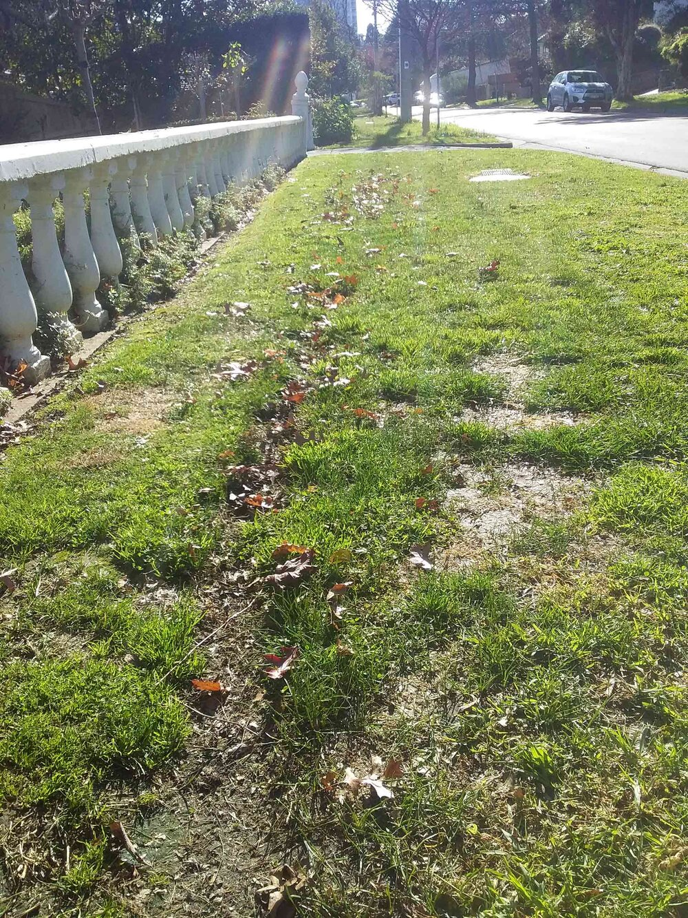 In this image, the brushcutter worked their way along the fence on the left towards us, which is anti-clockwise. Notice how all the dry leaves that were along that fenceline trapped under the seaside daisy bushes has been pushed back onto the lawn which has already been mown. Now this patch has to be mown again. Image via Plants Grow Here.