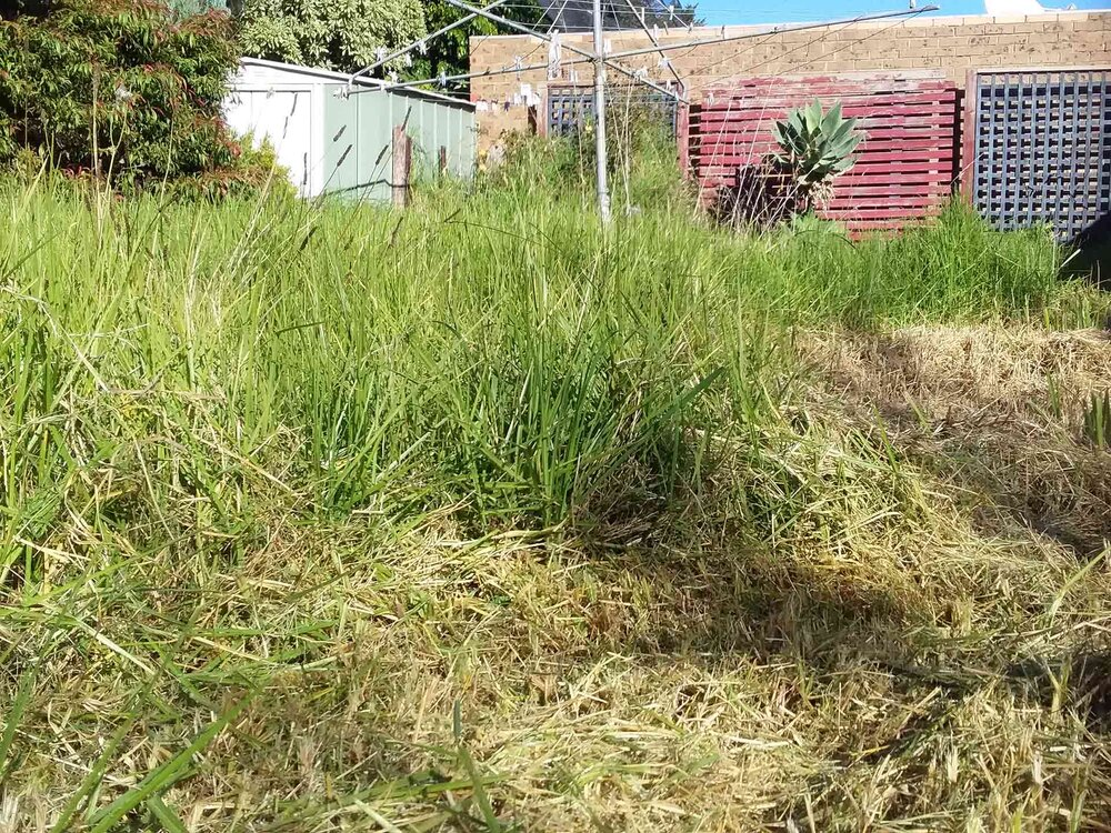 With a very long lawn, step one is to cut the length down. Image via Plants Grow Here.
