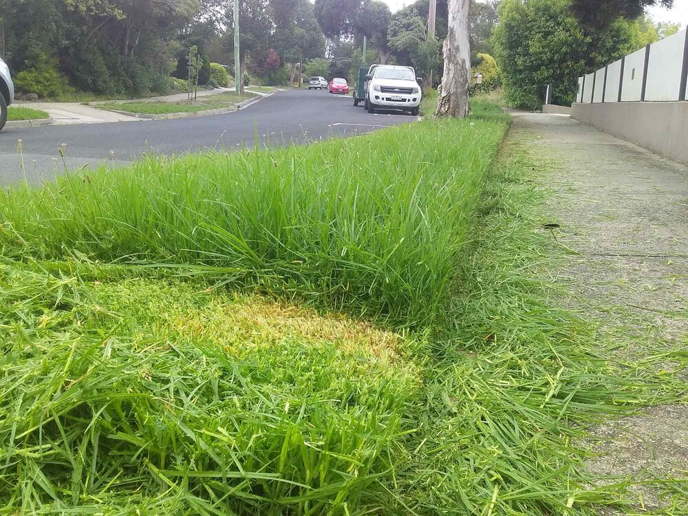 Cutting more than halfway into long kikuyu grass so that the brown part of the stalks is exposed. Image via Plants Grow Here.