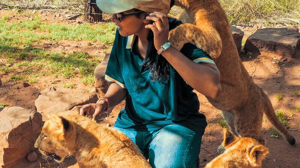 非洲狮子研究人员