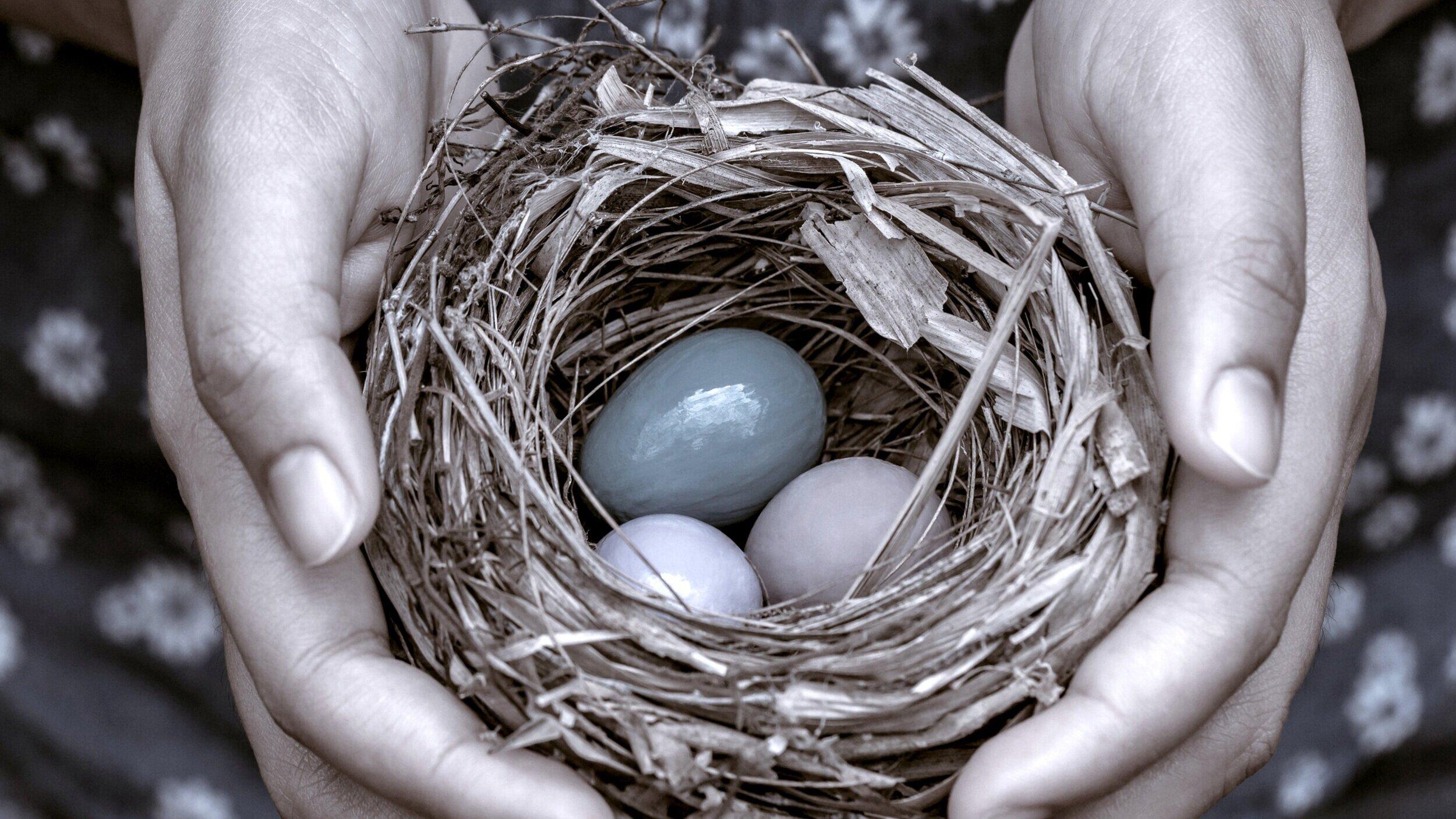nest+image.jpg