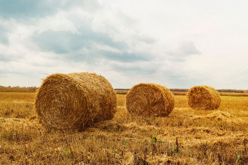 High quality Haystack for cattle