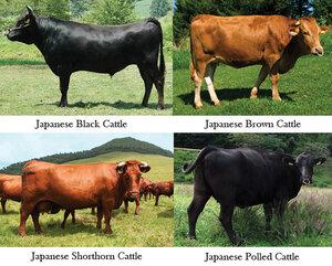 japanese wagyu breeds