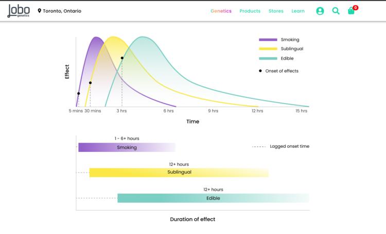 Normal THC Metabolism -    Lobo Genetics THC Test Results Report    shown on    LoboJane.com