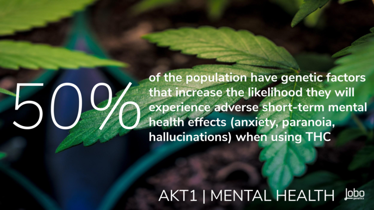 THC effects dopamine levels in the brain which isn't always enjoyable. Too large of an imbalance of dopamine can cause short-term adverse mental health effects no matter what version of the AKT1 gene you have.     AKT1 C/T (intermediate risk for acute adverse effects from THC use) is carried by 50% of the population. The AKT1 C/C variation is carried by another 25% percent (higher risk for long-term mental health diagnosis with frequent THC use).   8    Now that you've learned about what your DNA has to do with your cannabis journey, you may want to find out about your unique cannabis genetic profile. Lobo tests for all the genes mentioned above with a simple cheek swab kit done from the comfort of your own home.      You can order your Lobo test CBD + THC Genetic Test kits here.     If you want to receive the latest Higher Learning updates delivered to your inbox, scroll down to subscribe to our newsletter.