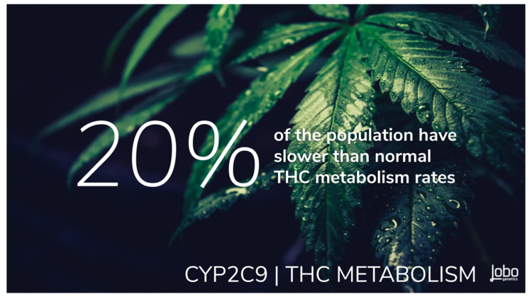 THC METABOLISM RATE    is predicted by the efficiency of the    CYP2C9    gene (pronounced sip-two-see-nine) to produce the enzyme that binds to THC which allows it to interact with and be eliminated by the body.